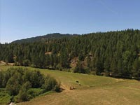 Great 20 acre parcel located in Careywood just off Hwy 95 half way between Sandpoint and Coeur d'Alene, Idaho.