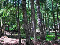5 Acres - Lot #3 in the Winterhaven Subdivision for sale on Baldy Mountain in Sandpoint Idaho!